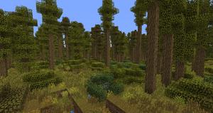 Deciduous-Forest