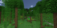 Lush Swampland