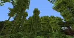 BambooForest02