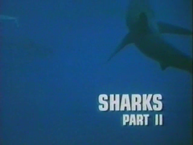 File:Sharks Part II.png