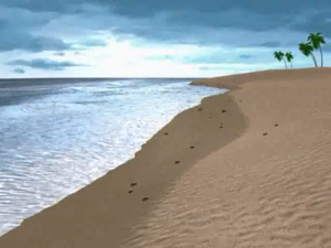 Papa Nihu Reef Shore