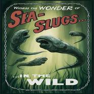 Sea Slugs in the wild advertisment
