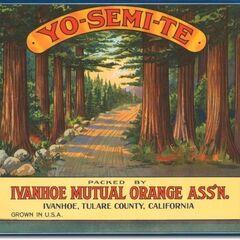 <i>Botanik Bahçesi posterine temel hazırlamış bir meyve sandığı etiketi.</i>