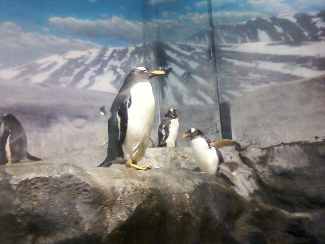 File:Penguins 01.jpg