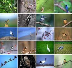 File:Bird Collage.jpg