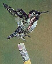 Bird on pencil
