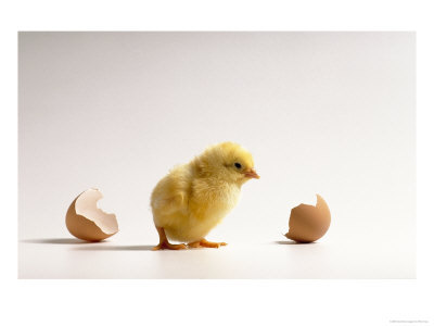 File:Baby Chick and Egg.jpg