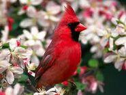 Cardinal in Flowers