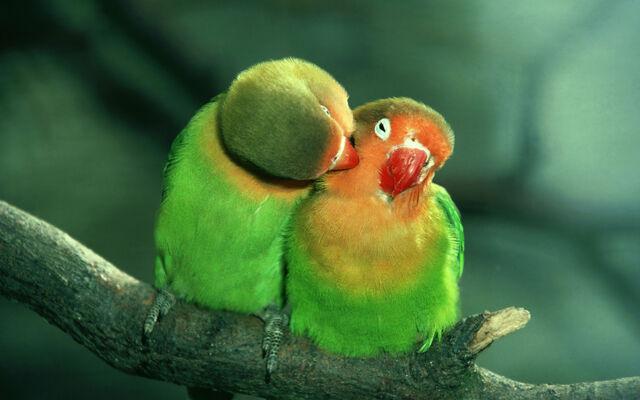 File:Beautifulbirds17.jpg