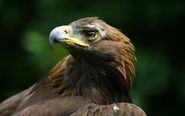 Birdsofprey11