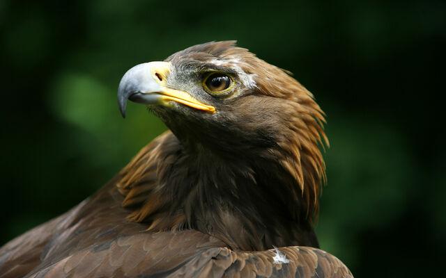 File:Birdsofprey11.jpg