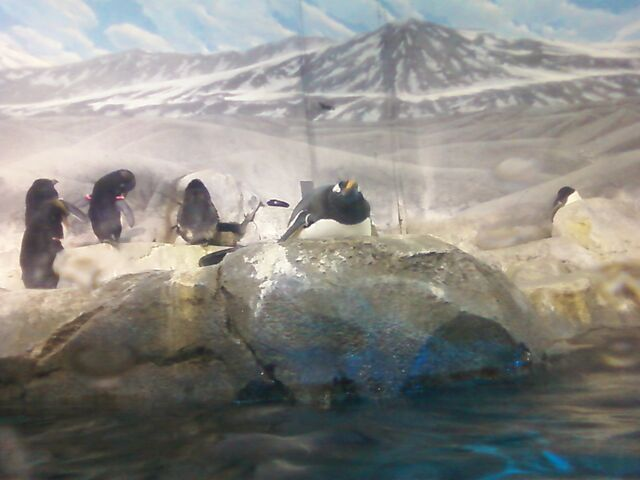 File:Penguins2.jpg