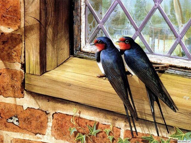 File:Couple Swallows.jpg