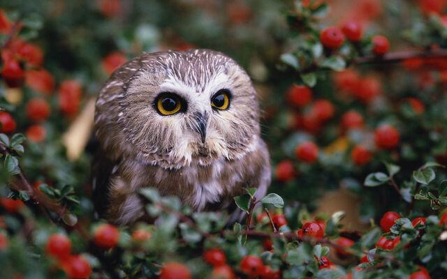 File:Birdsofprey12.jpg