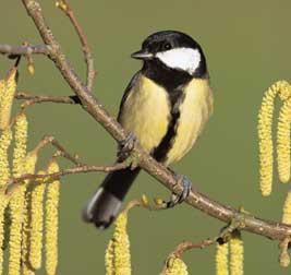 File:City song birds.jpg