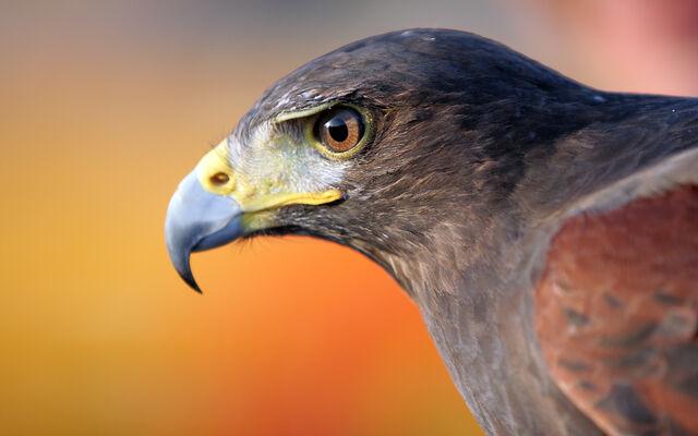 File:Birdsofprey2.jpg