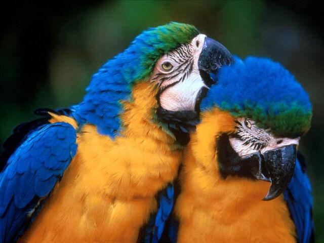 File:Two-parrots.jpg