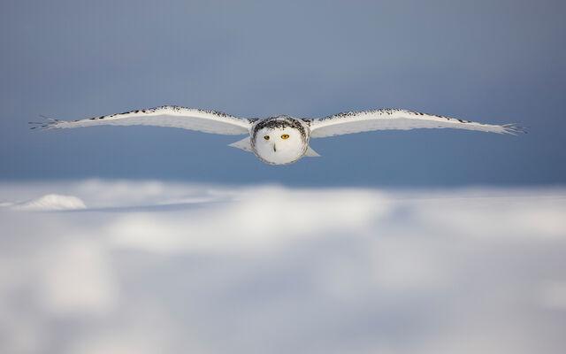 File:Birdsofprey6.jpg