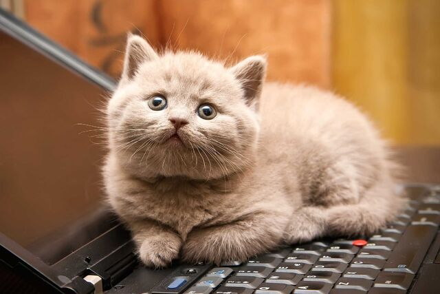 File:01-cat-wants-to-tell-you-laptop.jpg
