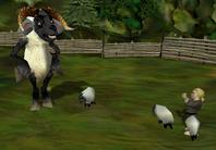 Sheepherder reward