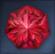 Flawless Brilliant Hongmoon Heptagonal Ruby