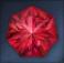 Flawless Brilliant Hongmoon Heptagonal Ruby.png