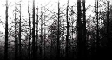 File:Blairwitch.jpg