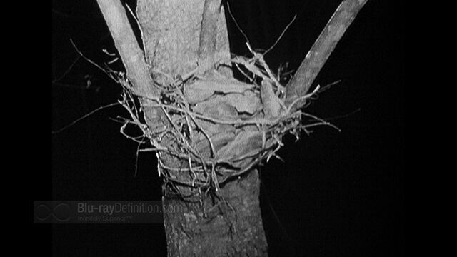 File:BDDefinition-BlairWitch-d-1080.jpg