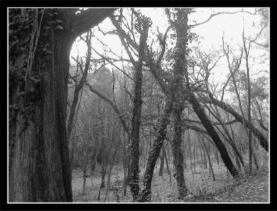 File:Blair witch forest by daZkin.jpg