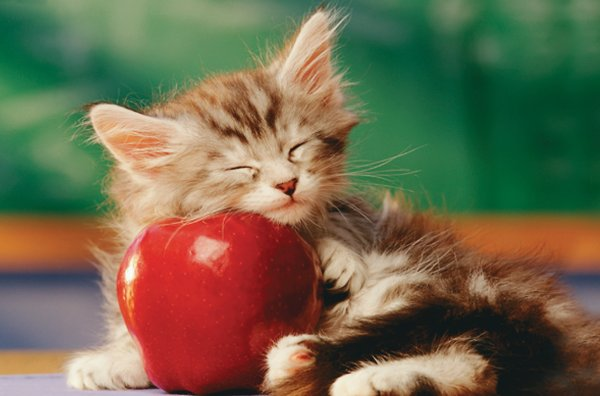 File:Cat with Apple .jpeg