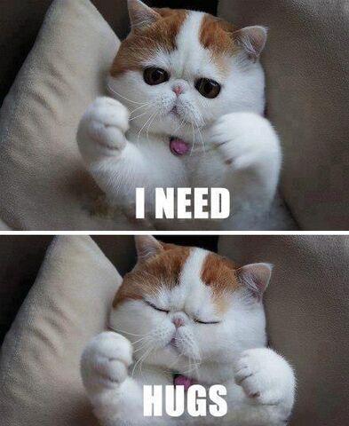 File:Cat-needs-hugs.jpg