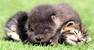 Otterxcat