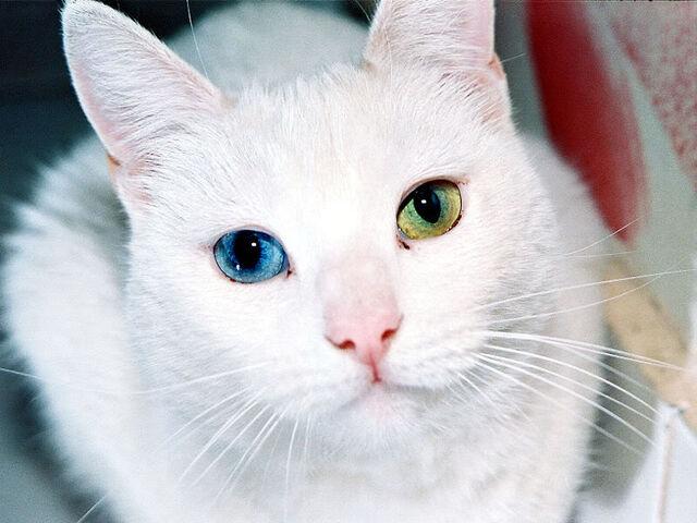 File:Beautiful-cats-12.jpg