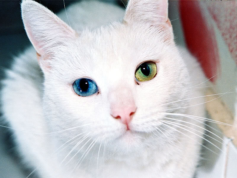 Beautiful-cats-12