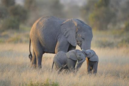 File:Elephant family.jpg