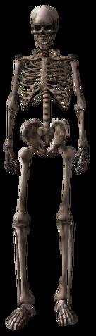 File:Skeletonz.png