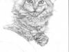 File:Thumbs lionheart.jpg