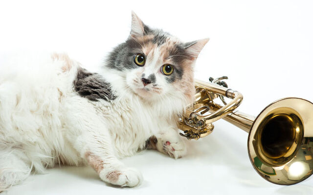 File:Kitty8-hover.jpg