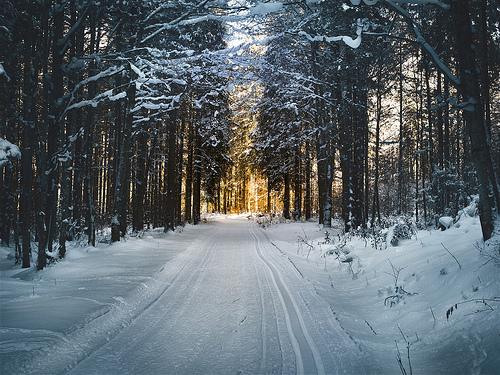 File:Cross country skiing..jpg