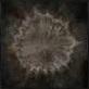 Imprint Circle