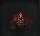 Coldblood Dew (1)