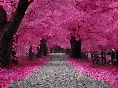 Blossom Forest Wallpaper ugd84