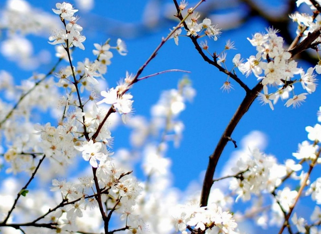 File:Blossom meadow.png