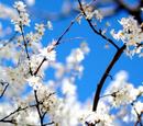 Blossom Meadow