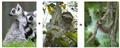 Thumbnail for version as of 18:26, May 24, 2012