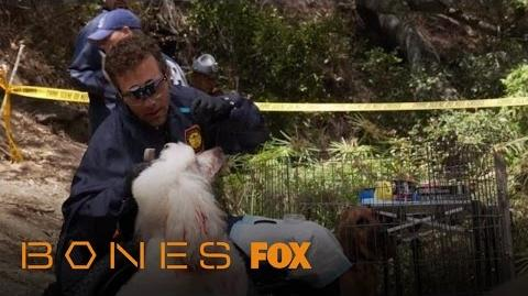 Hodgins Removes Evidence From A Poodle Season 12 Ep