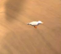 File:Ice Seagull 030116.jpg