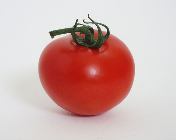 File:Tomato2.jpg