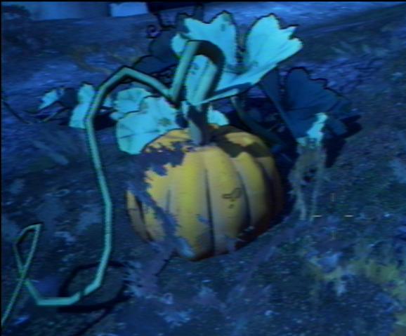 File:Pumpkin 1.png