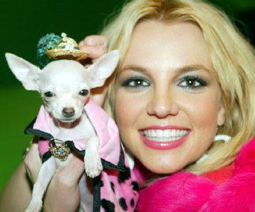 File:Britney spears dog.jpg